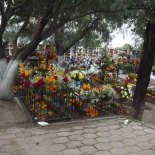 Cemetery Adorned with Flowers (4)