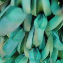 Jade vine 7 by Suzanne Hosang