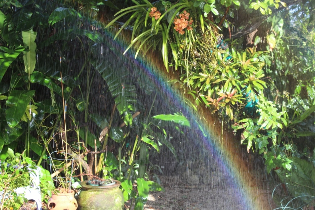 Rainbow Created While Watering Orchids on my Tree