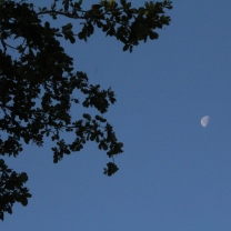 Silhouette by the Moon